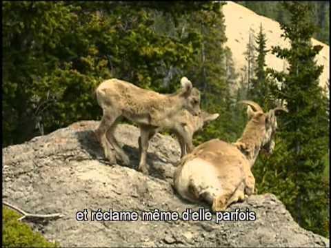 Documentaire Animalier_Chroniques de l'Amérique Sauvage DVD2 sous titré