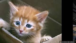Картинки котиков под музыку.