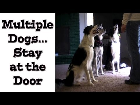 Multiple Dogs: Stay at the Door - Dog training