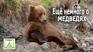 Ещё немного о медведях.(Как защититься от медведя в лесу? Что делать при встрече с медведем?Это только в мультике медведь это смешно..., 2016-04-05T11:20:34.000Z)