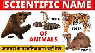 Animal Kingdom - Scientific Name | जानवरो के वैज्ञानिक नाम यहाँ देखे