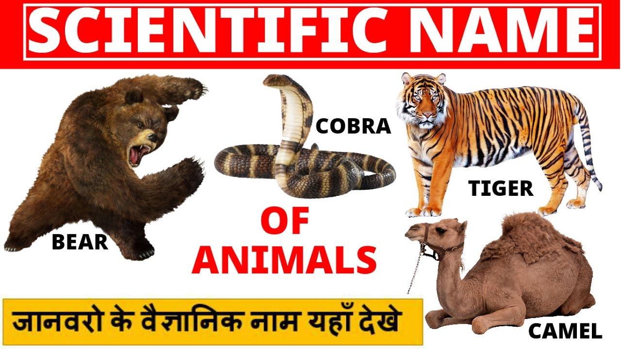 Animal Kingdom Scientific Name  E A C E A Be E A A E A B E A B E A B  E A  E A   E A B E A  E A C E A D E A E E A Be E A A E A Bf E A   E A A