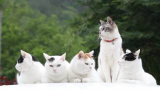 http://kagonekoshiro.blog86.fc2.com/blog-entry-13124.html のせ猫オ...