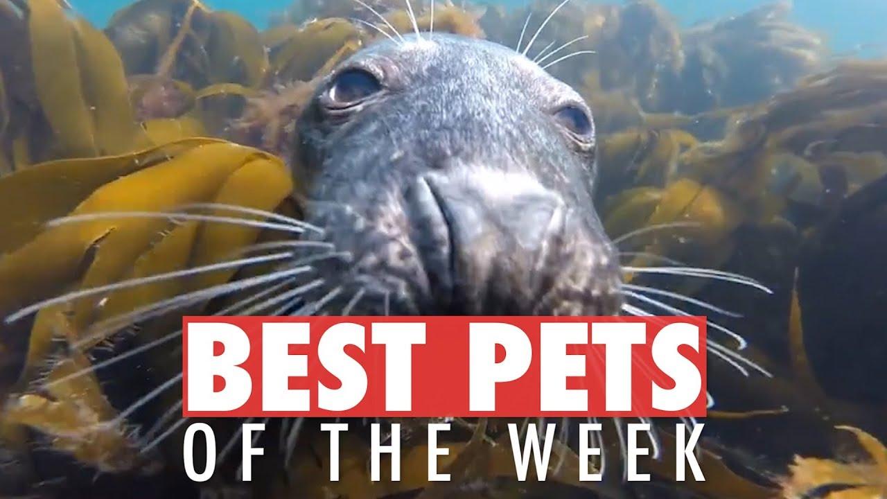 Best Pets of the Week   July 2018 Week 3