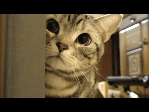 Cats Being Jerks ★ CATS Being CATS (HD) [Funny Pets]