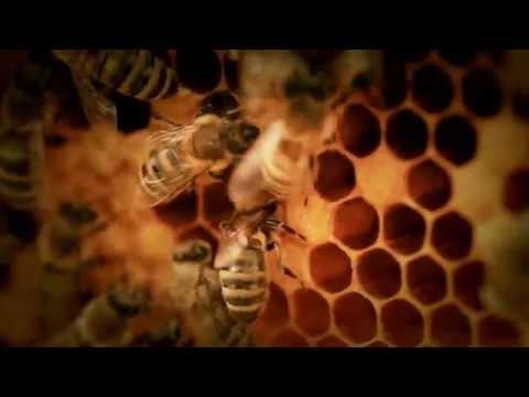 Die Honigmacher - Kein Leben ohne die Biene