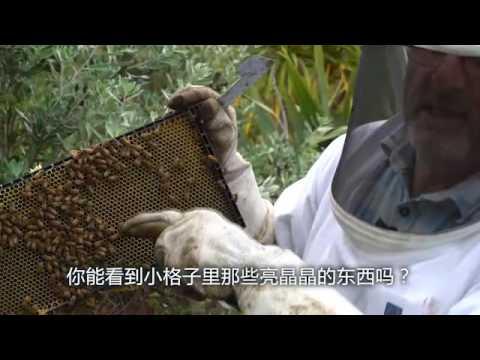 Alyssa Chia discovers Manuka Health in the New Zealand Nature