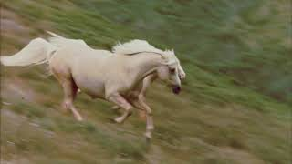 The Silver Stallion - Jeanne Aster - My Freedom