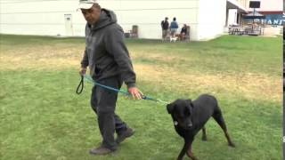 Dog Training With The Cecchi Method