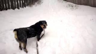 Гуляем с собакой зимой.Первый снег.