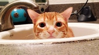 A Cat's Guide to Bathrooms thumbnail