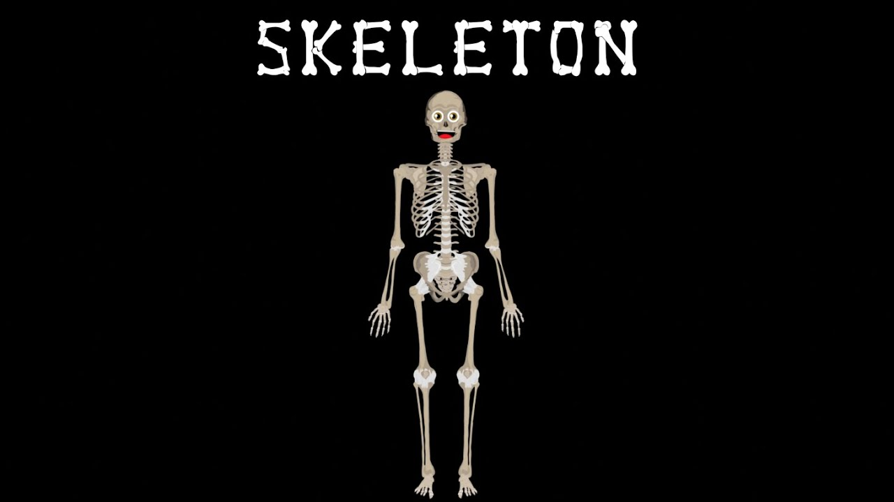 medium resolution of skeletal system the human body for kids learn about the human body for children youtube