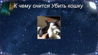 К чему снится Убить кошку (Сонник)