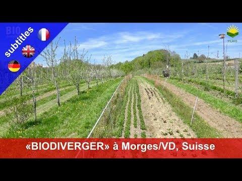 """Agroforesterie et permaculture: Le """"BioDiVerger de Marcelin"""" à Morges/VD (Suisse)"""