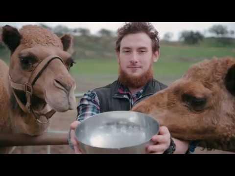 Desert Farms - Camel Milk Farming Parctices