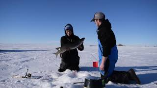 tip up fishing northern pike