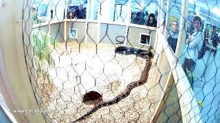 Змеиный вольер на выставке в  Германии, Sindelfingen, 2018