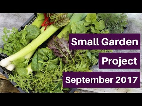 Small garden (1), varied growing & regular harvesting from 3 beds 5m/16ft long