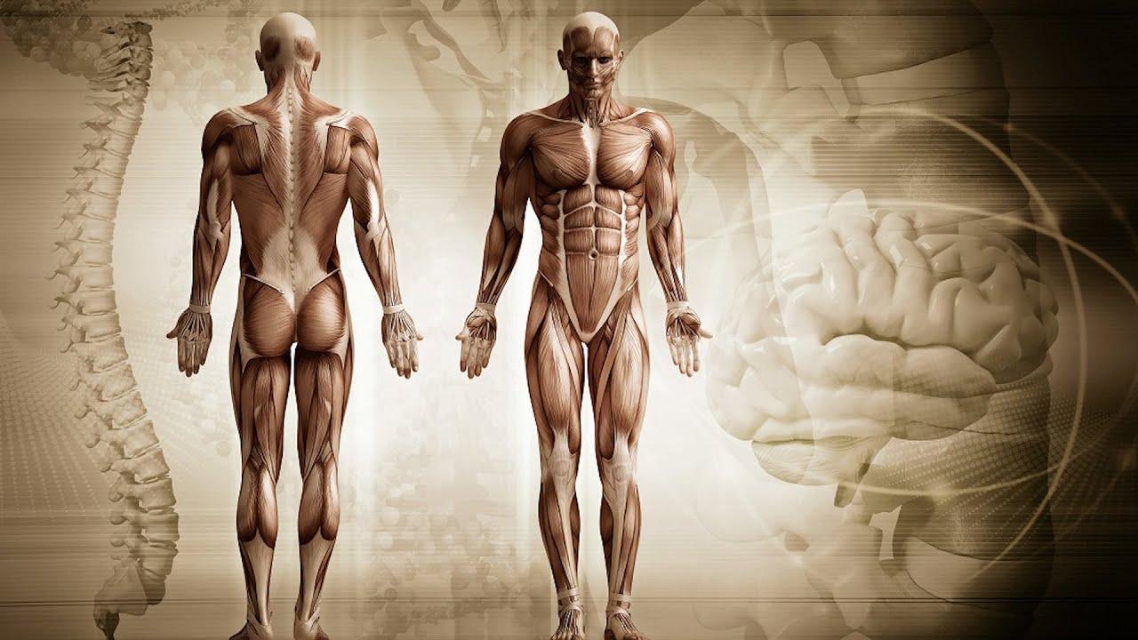 organe afectate de percheziții umane)
