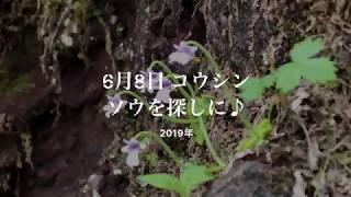 2019 06 コウシンソウとお山めぐり(足尾)