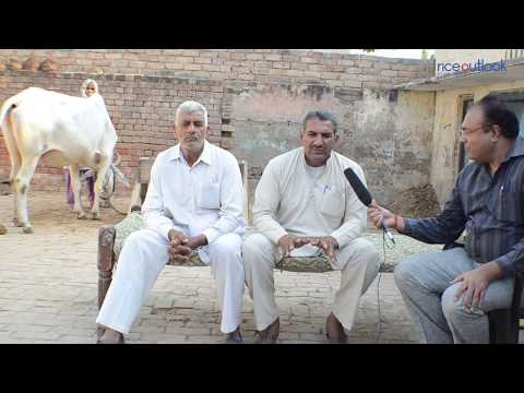Organic Farming in India by B-Tech Engineer Sunil Kumar +91-9467647961