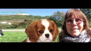 Cavalier King Charles Spaniel Im September
