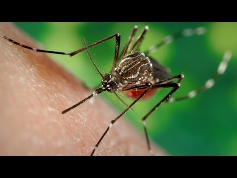 Researchers Attacking Zika Virus By Stirring Up Mosquitoes' Taste Buds