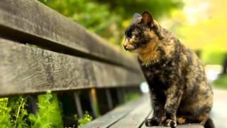 Котики и кошечки с картинки