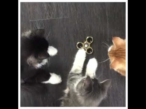 Cats playing with Fidget-Spinner