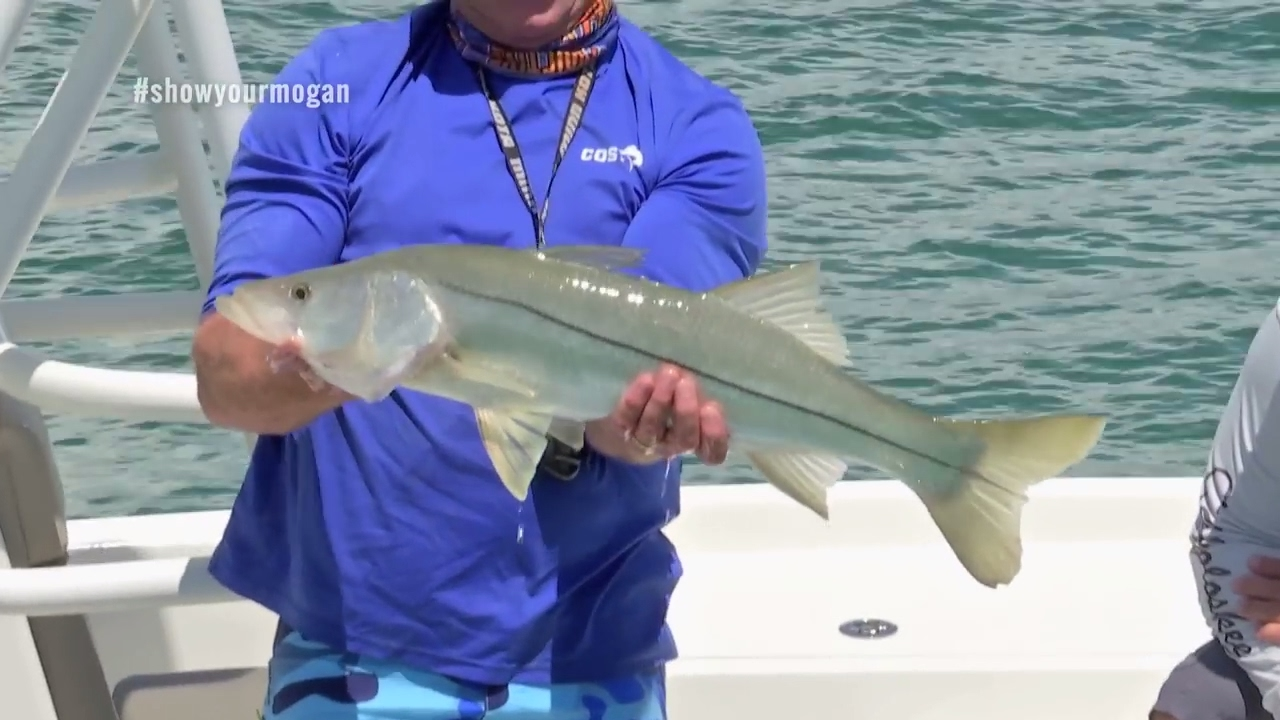 Chokoloskee offshore snook fishing on the wrecks youtube for Chokoloskee fishing report