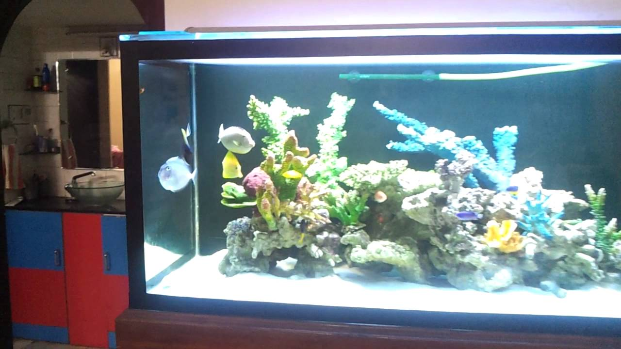 Fish aquarium in vadodara -