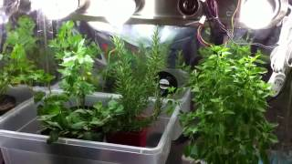 Indoor Garden Tips   Growing Herbs Indoors in Containers with Grow Lights