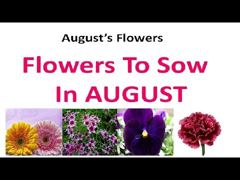 Flowers To Grow In AUGUST ! Flowers to sow in August