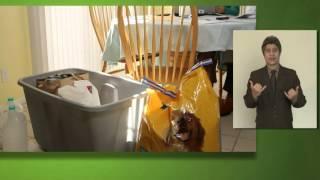 Preparing Makes Sense for Pet Owners