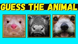 Guess The Animal By Close Up? Can You Guess The Animal Quiz