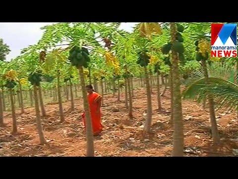 Social worker Uma Preman initiated an organic revolution in  Attappadi   | Manorama News