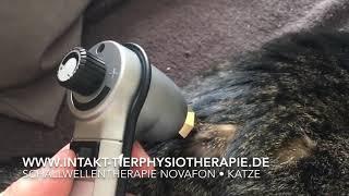 Schallwellentherapie Novafon bei einer älteren Katze