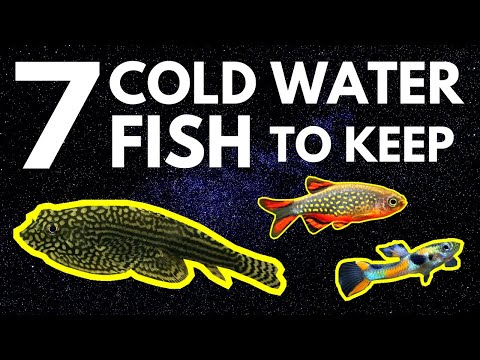 Top 7 Cold Water Fish That Don't Need A Heater