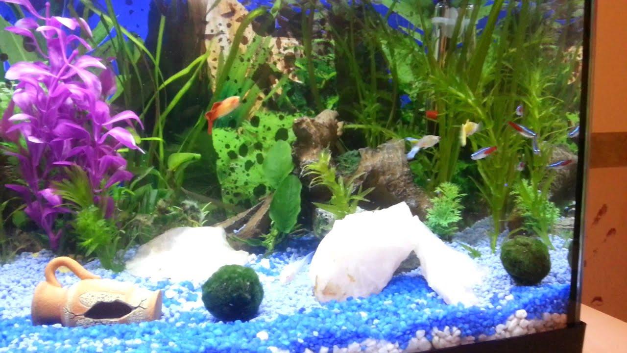 Il mio acquario di acqua dolce da 30 litri youtube for Acqua acquario