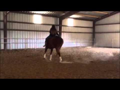 Stout Sorrel Quarter Horse Gelding