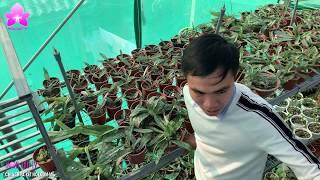 """Tận Mắt """"Thế Giới Lan Hài"""" Vườn Lan Duy Dương Hải Hậu Nam Định [HOALANTV]"""