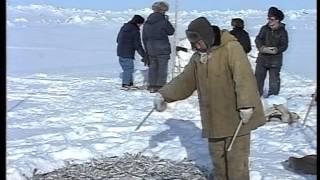 Рыбалка на Чукотке №2
