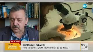 Какво да правим след ухапване от кърлеж - Здравей, България (06.06.2018г.)