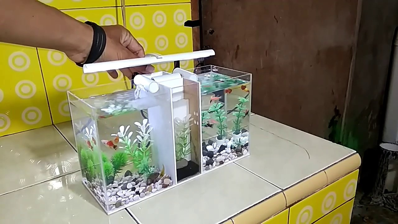 Aquarium Ikan Cupang Betta Fish Tank From Pvc Pipe Youtube