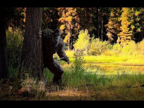 World Bigfoot Radio #65 pt.1 ~ Summer expeditions 2018/Grizz and Shane