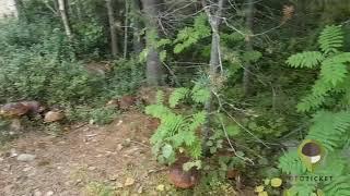 BOLETUS EDULIS MEGA - 2018 fungaia