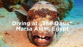 "Diving ""The Oasis"", Marsa Alam, Egypt"