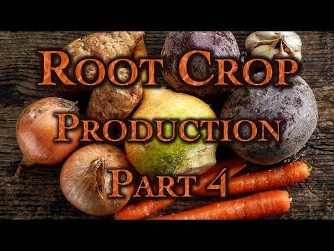 Root Crop Production Part 4