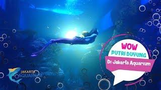 Ada Putri Duyung di Jakarta Aquarium Neo Soho...!!!
