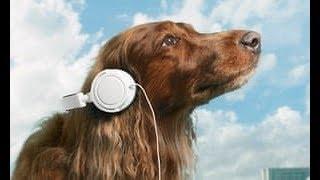 ✅ Звуки которых ваша собака полюбит!